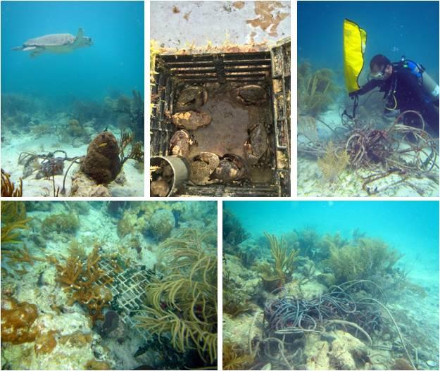 Biscayne Reef Restore 01