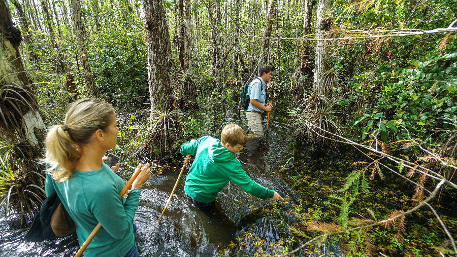 swamp walk opt